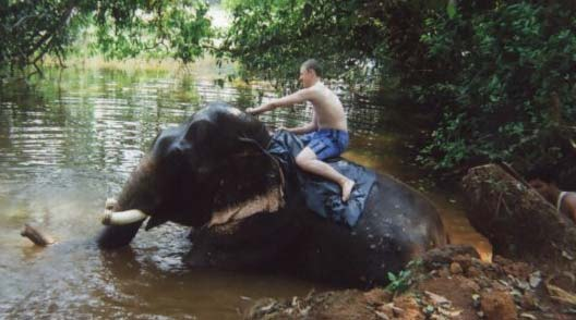 Elephant ride in Goa